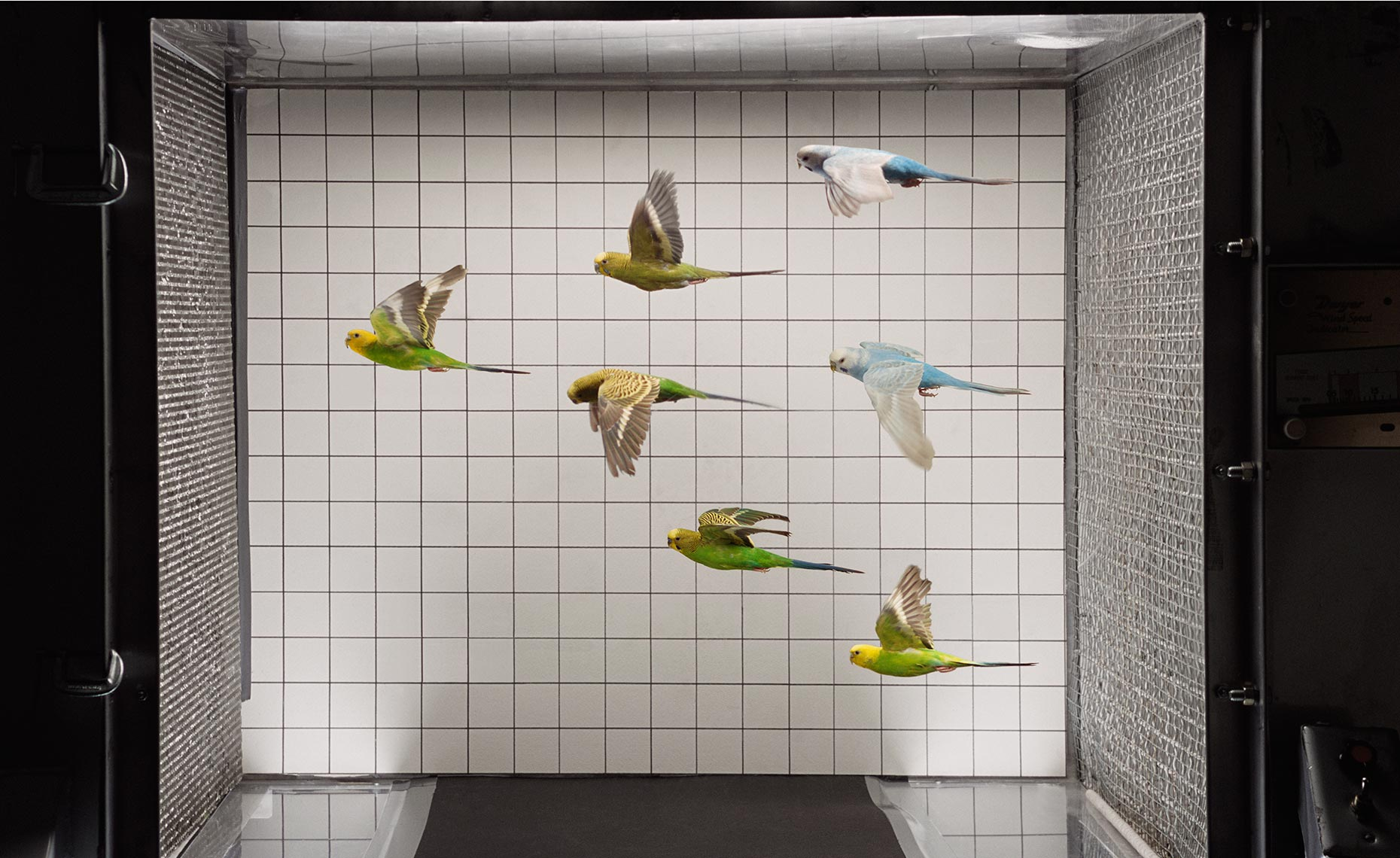 Birds In Wind Tunnel